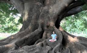 ancient tree of India